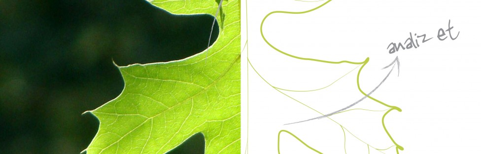 Biomimicry Sketch Analysis